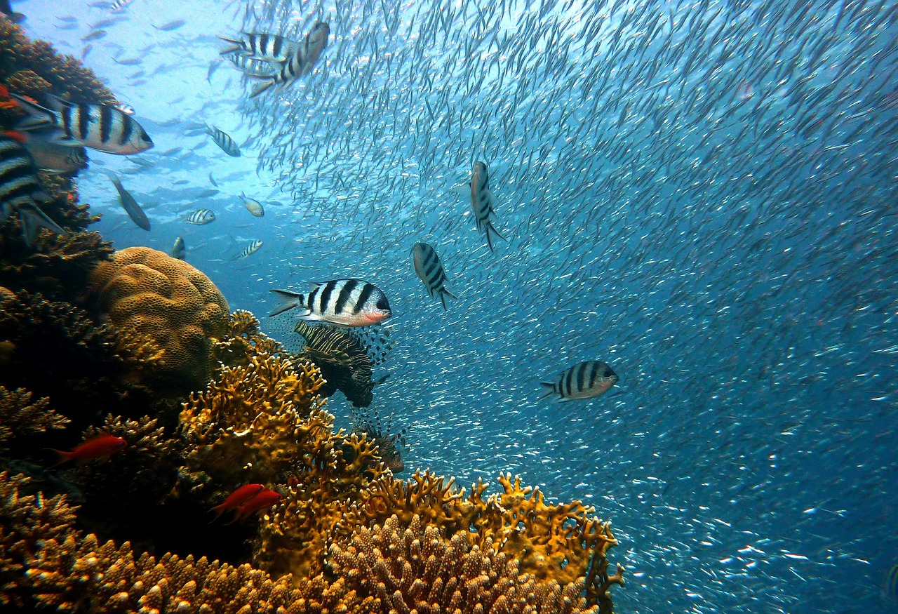 Great-barrier-reef-fisk